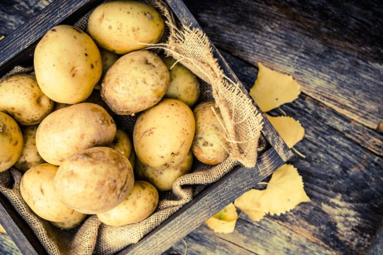 From Planting to Harvesting: How To Grow Your Own Potatoes